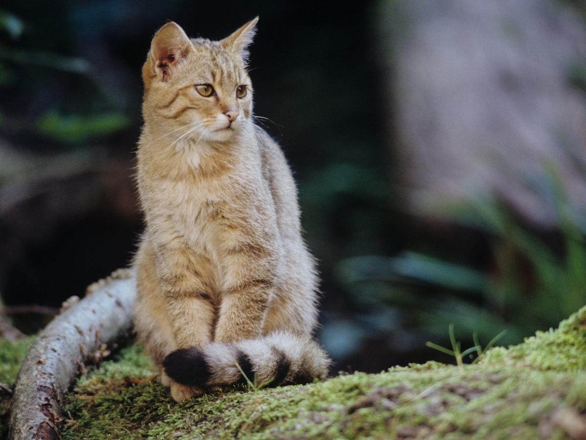 Einführungsseminar Wildkatzenbotschafter*innen