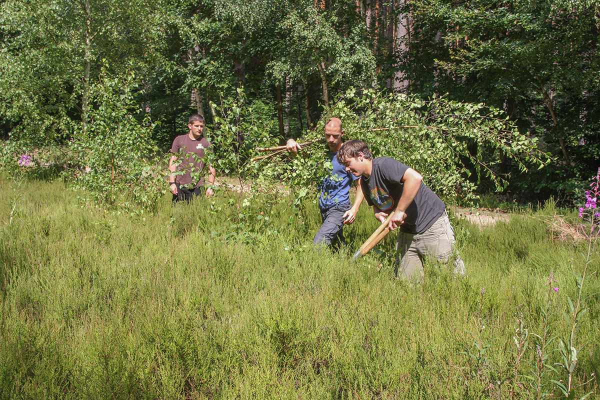 Erlebnis Heidekraut und Wald