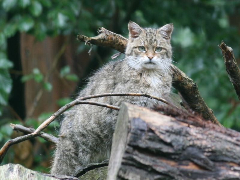 Wildkatzen-Exkursion in den Leipziger Auwald