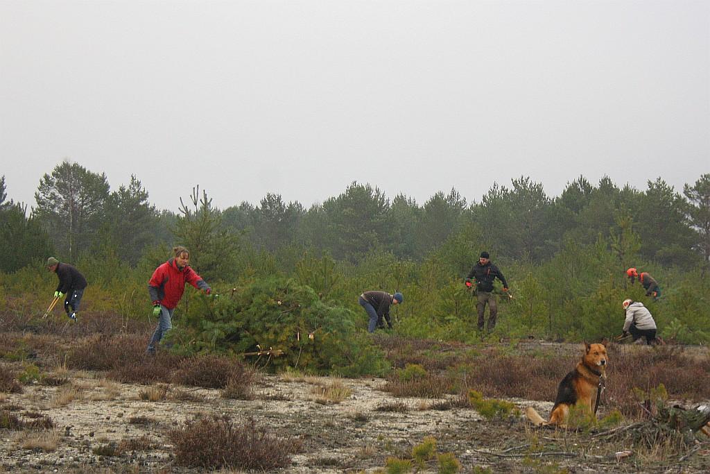 Weihnachtsbäume für den Artenschutz – Offenland erhalten für den Wiedehopf