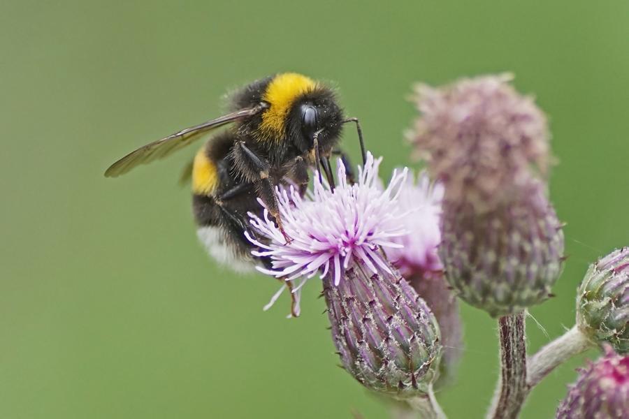 Futter fürs ganze Jahr – Anlage von Trachtbeeten für Insekten