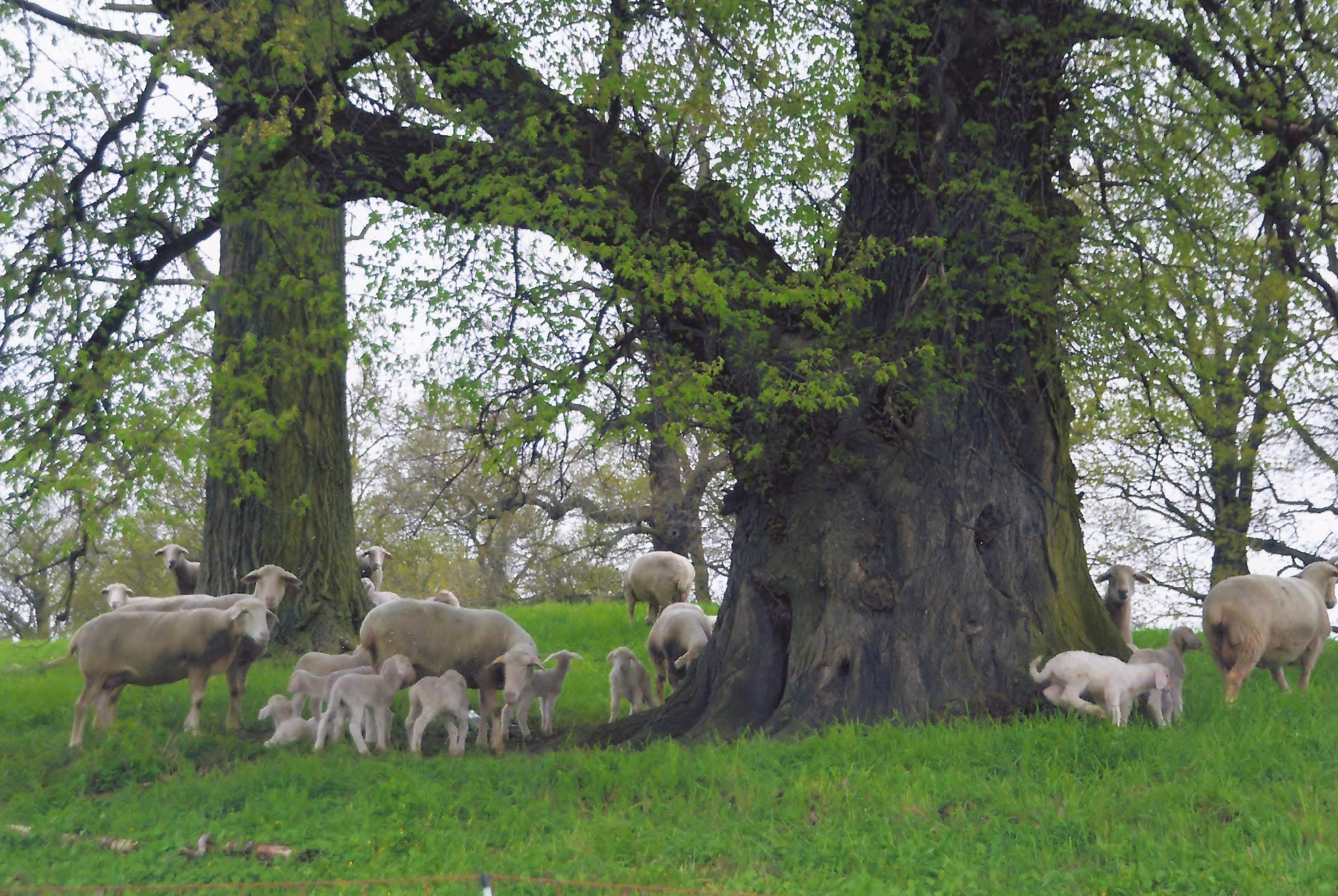 Bäume pflanzen an der Alten Elbe Kathewitz