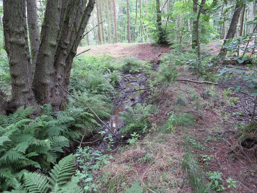 Exkursion in den Stadtwald Dommitzsch – Lebensraum des Kammmolches