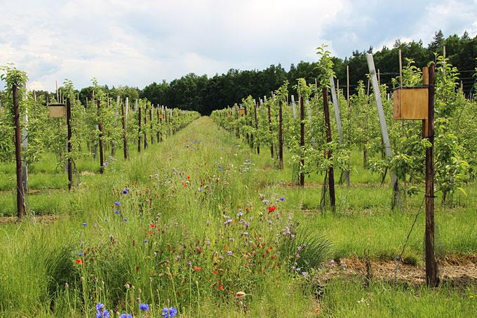 Naturschutzeinsatz an Streuobstwiese Wallengrün