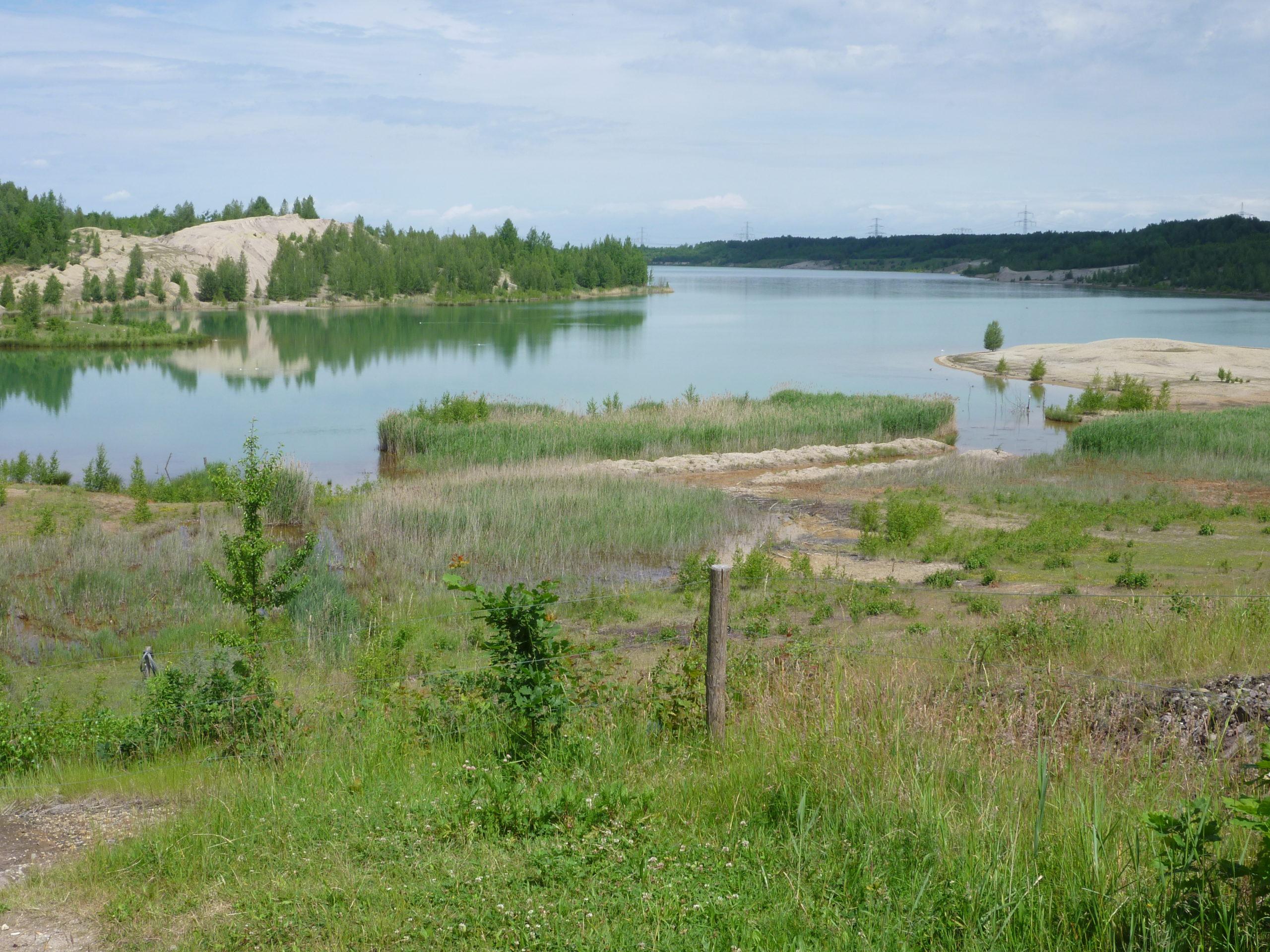Beweidungsprojekte im Naturschutzgebiet Bockwitz