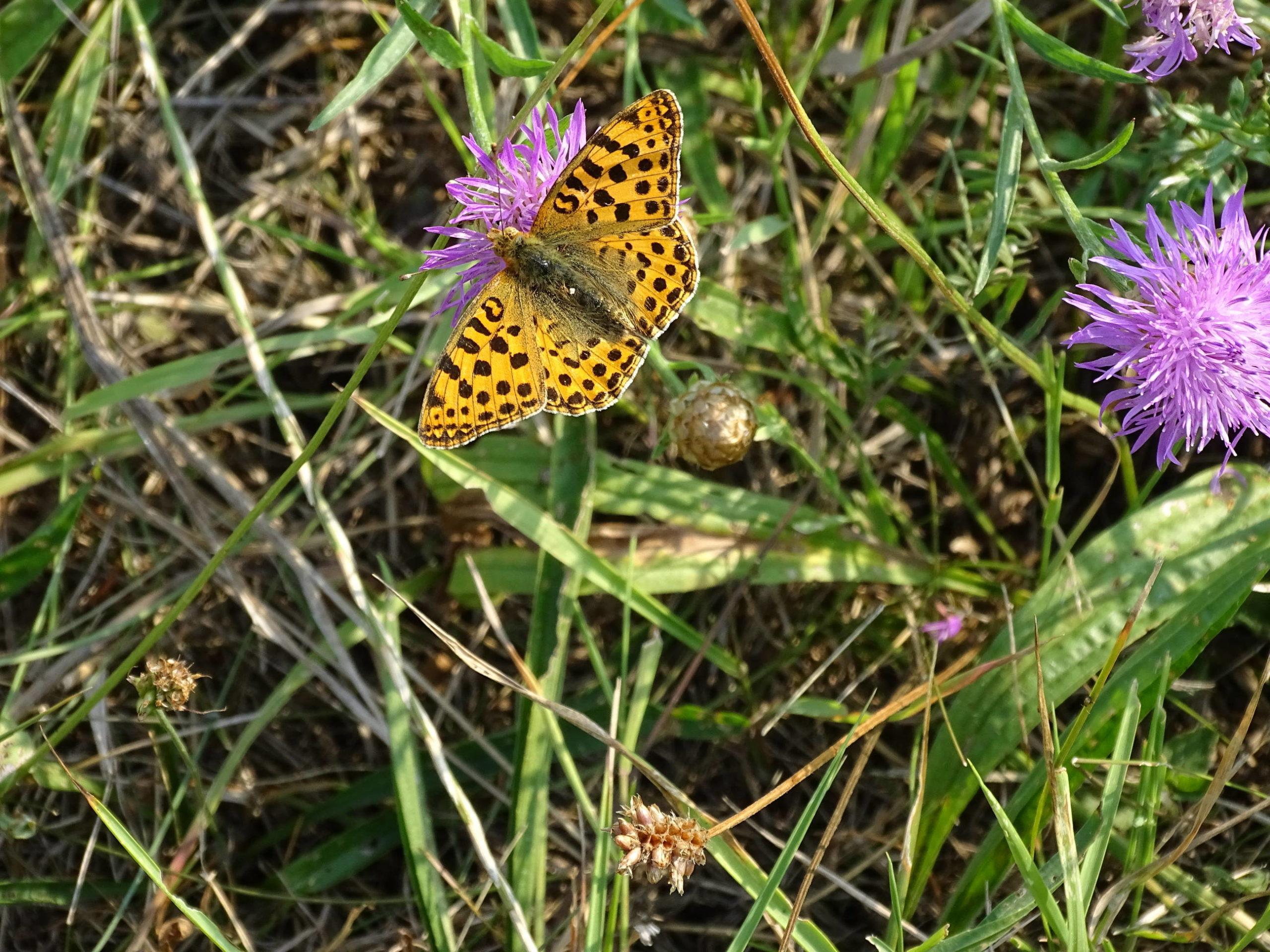 Bunte Pracht der Schmetterlinge in der Ökostation