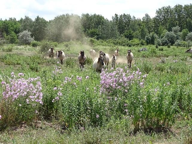 Wilde Weiden zähmen – Gemeinsamer Aktionstag zur Pflege der Konikweide Deutzen