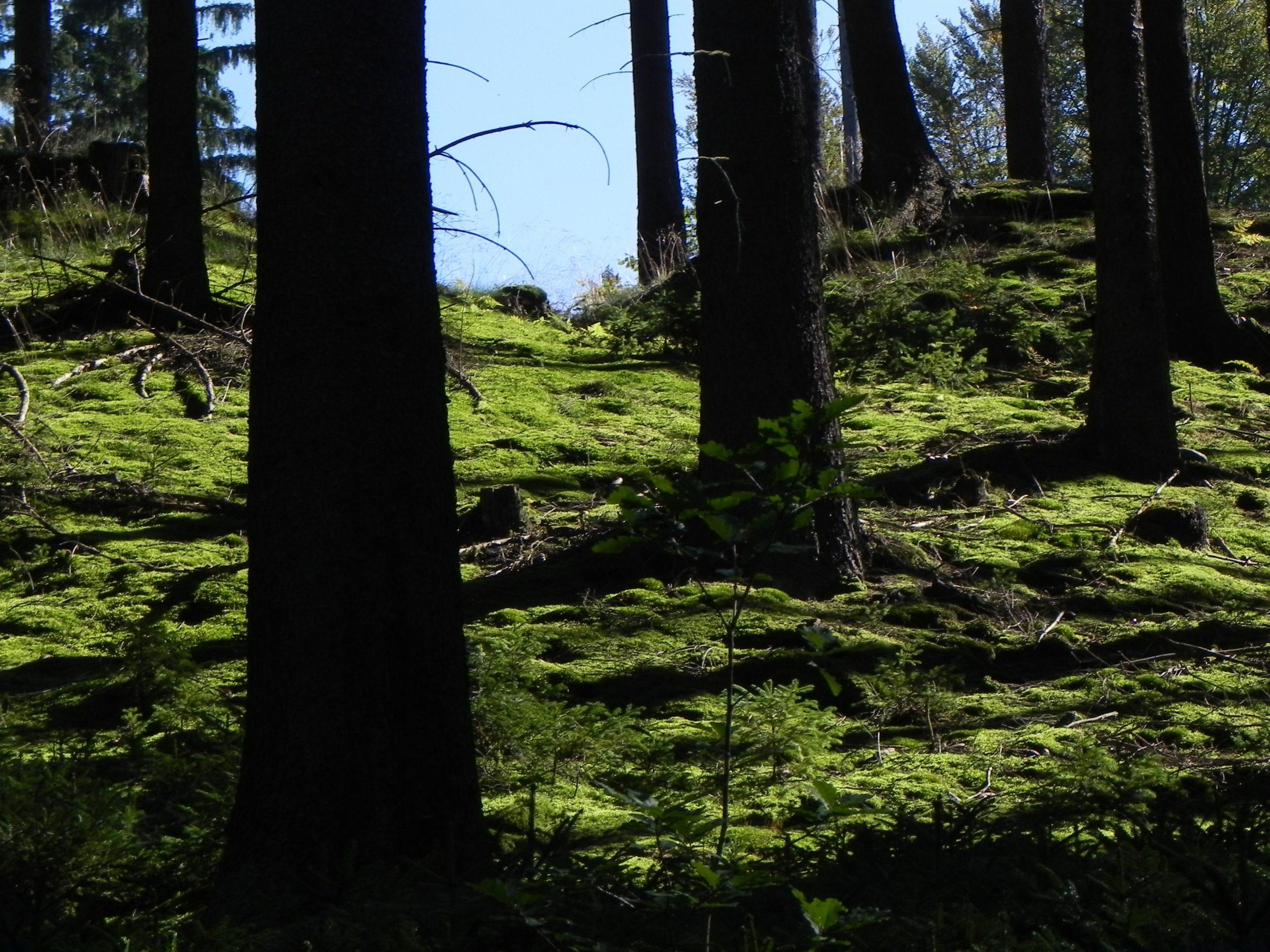 Hilfe für die Märchenwiese Rübenau