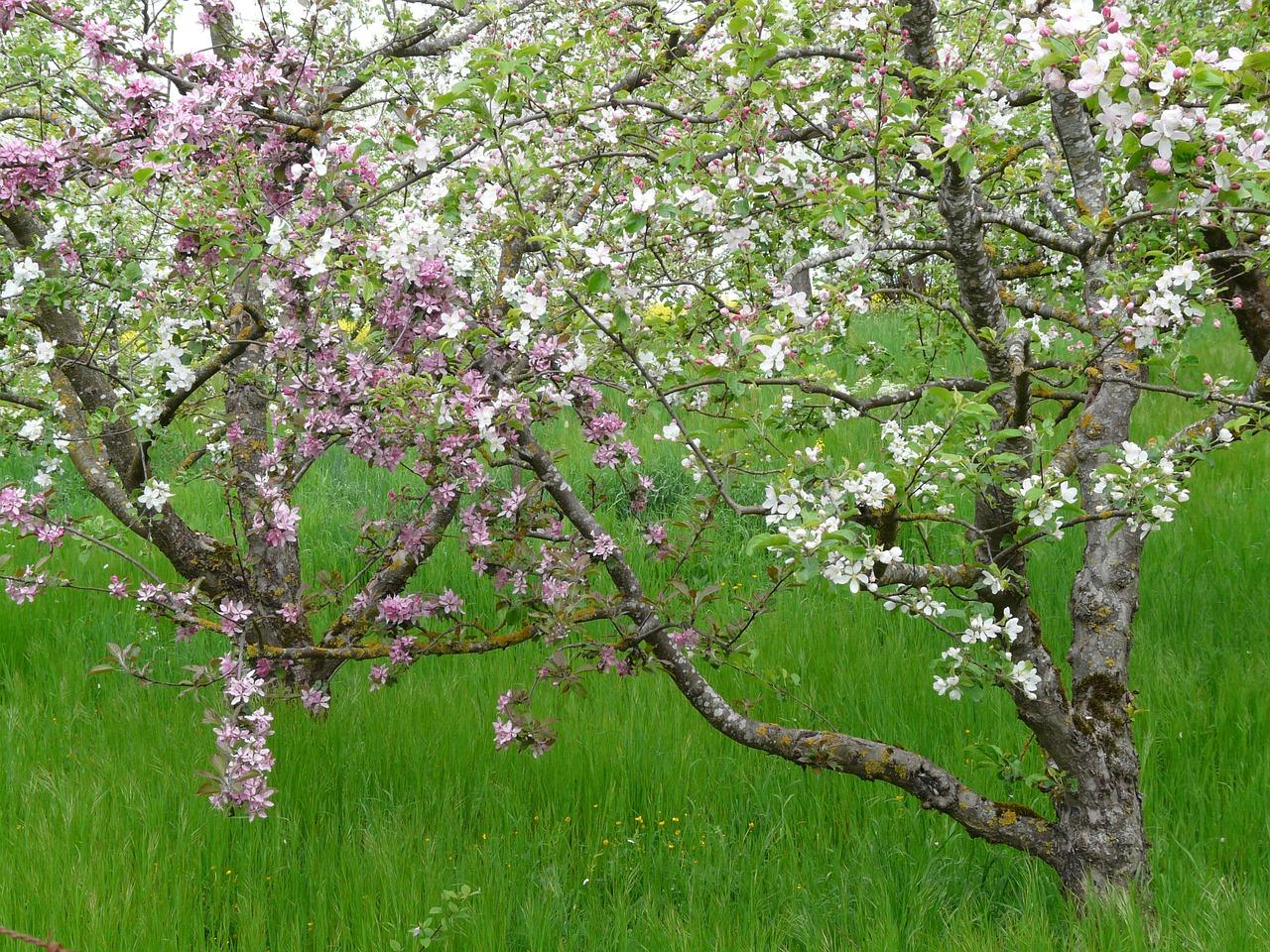 Pflanzaktion – Baum des Jahres