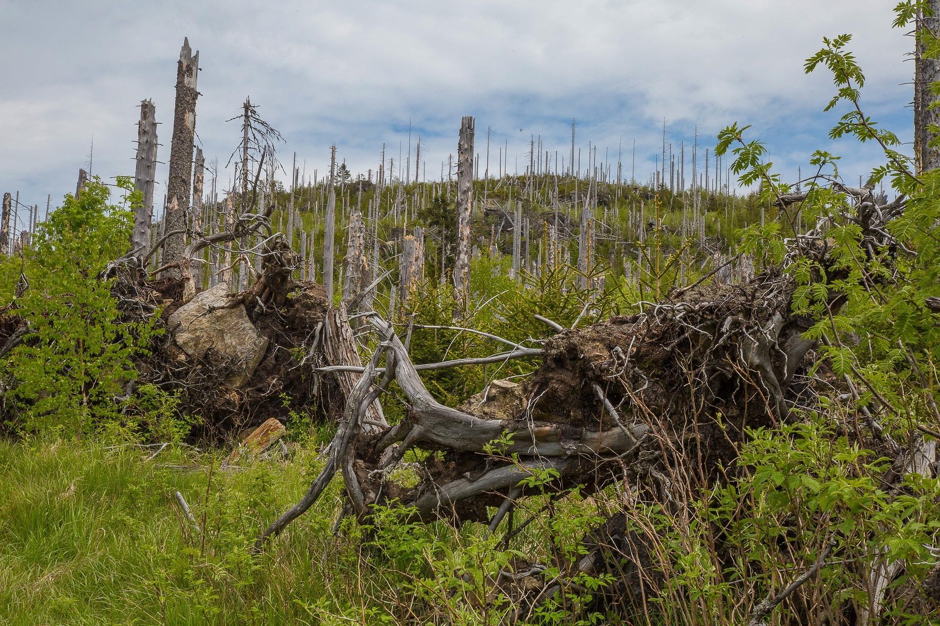 Waldschäden überall – Eure Mithilfe ist gefragt